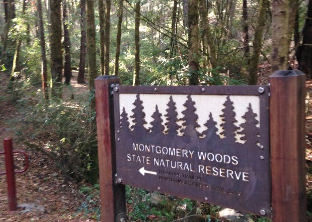Montgomery Woods State Reserve near Ukiah holds some of the mostspectacular redwood groves in the world. (Jackie Burrell/Bay Area News Group)