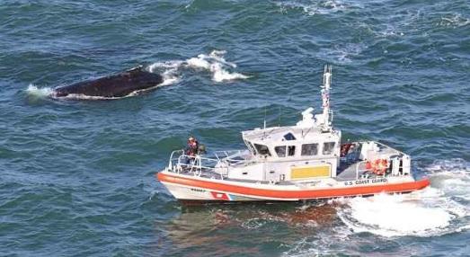 A U.S. Coast Guard crew tracks a humpback whale under the Golden Gate Bridge in May. (Courtesy Bill Keener/Golden Gate Cetacean Research — contributed)