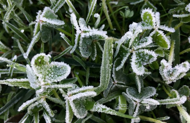 Ice crystals form on grass in downtown San Jose, Calif., on Sunday, December 18, 2016. Freeze warnings are in effect for most of the Bay Area. (Josie Lepe/Bay Area News Group)