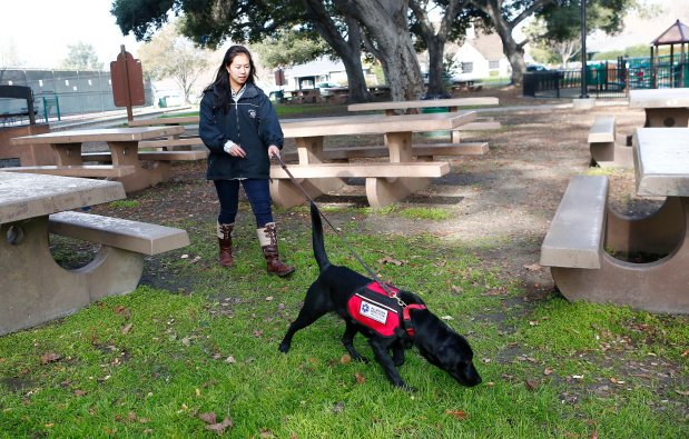 Patsy Hayes, 21, works with her service dog, Andromeda, during a training session at Willow Street Frank Bramhall Park in San Jose, Calif., on Tuesday, Jan. 17, 2017. Hayes suffers from severe allergy to latex products which has sent her to countless trips to the emergency room growing up. Andromeda has been trained to search out the allergen to be able to warn Hayes whenever latex products that could harm her are present in her environment. (Gary Reyes/Bay Area News Group)