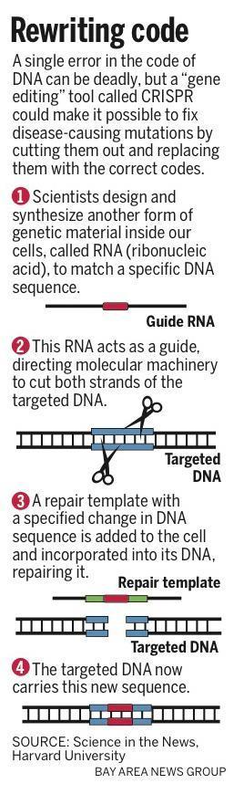 20150508_075515_SJM-CRISPR-0510