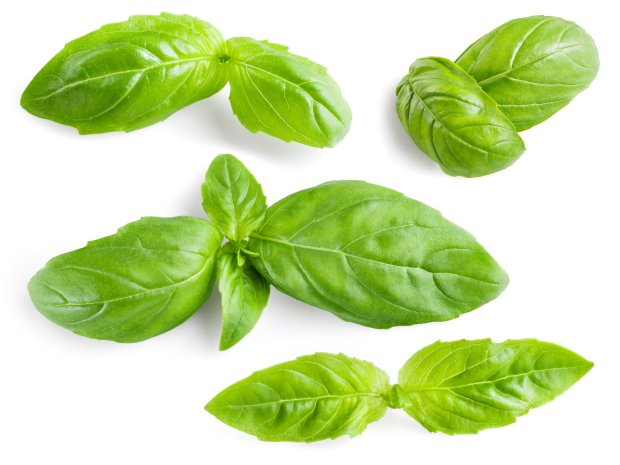 Sweet Italian basil is used in Italian cooking and it's the primeingredient in classic Genovese pesto. (Thinkstock)