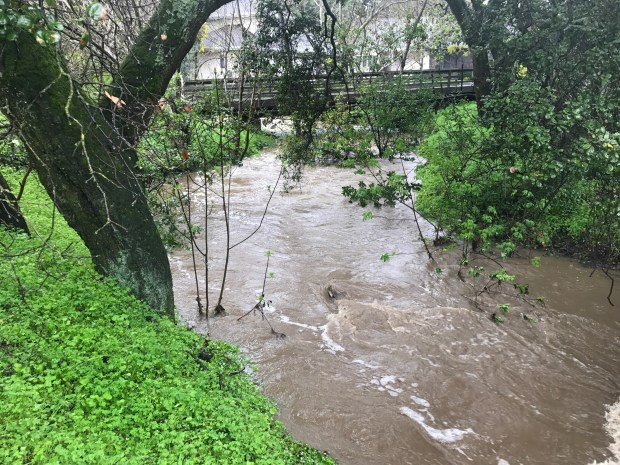 Water rushes along Atherton Channel at 9:58 a.m. on Tuesday near the intersection of Alameda de las Pulgas near Wolf Road in Atherton. The bridge in the background is the driveway of a private property. (George Rodericks / Town of Atherton)