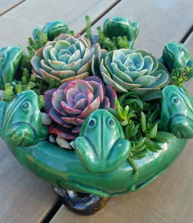 Succulents in whimsical pots will be available at the Santa Clara MasterGardeners' annual garden sale. (Courtesy of Laura Baaoro)