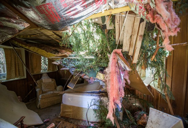 The roof of the Farway House at Deetjen's Big Sur Inn collapsed after a Redwood tree fell on the cabin during the recent storms in Big Sur, Calif. on Wednesday, March, 8, 2017. (LiPo Ching/Bay Area News Group)