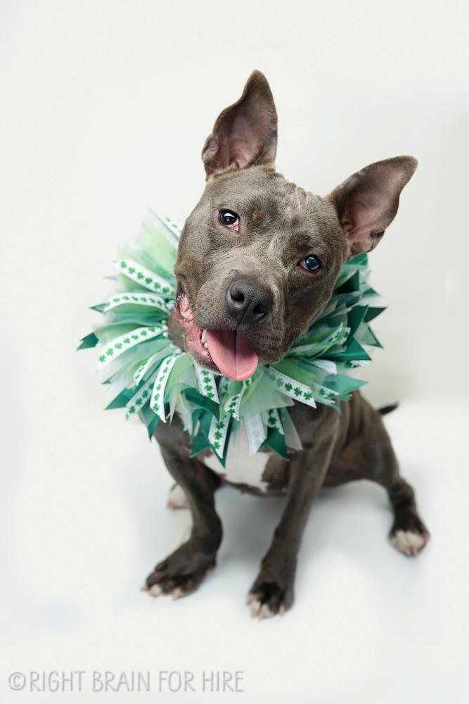 dog adoption events bay area