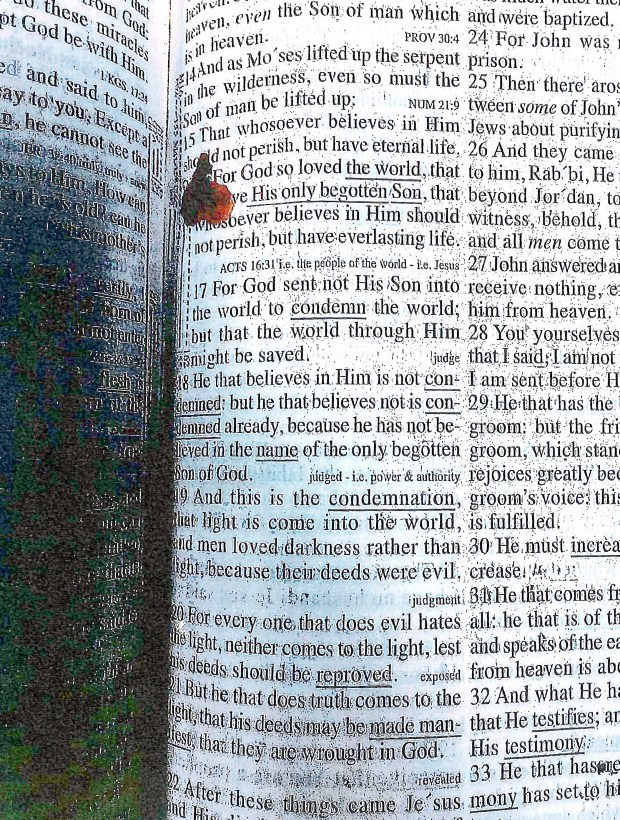 This photo released on Thursday, May 4, 2017, in a report by the Massachusetts Department of Correction shows a Bible open to John 3:16, with the verse marked in blood, found in the cell of former New England Patriots player Aaron Hernandez. (Massachusetts Department of Correction via AP)