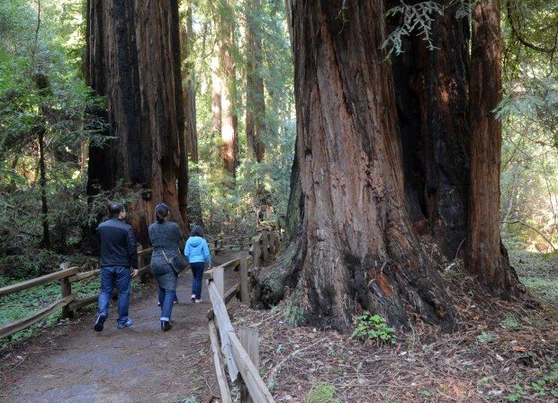 Visitors walk among redwood trees at Muir Woods National Monument in Mill Valley, Calif. on Friday, Jan, 27, 2017. (Alan Dep/Marin Independent Journal)