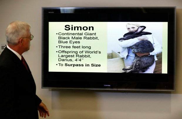 Attorney Guy Cook with a photo of Simon, a giant rabbit who died after flying from the United Kingdom to Chicago. (AP Photo/Charlie Neibergall)