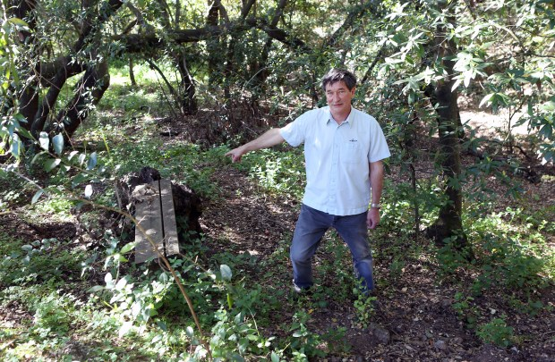 Photograph by George SakkestadLos Gatos resident Maurice Baker points to an area behind his Fairview Plaza house where a surveillance camera recorded a video of a bear-like animal walking down a trail around 8:30 p.m. last Friday.