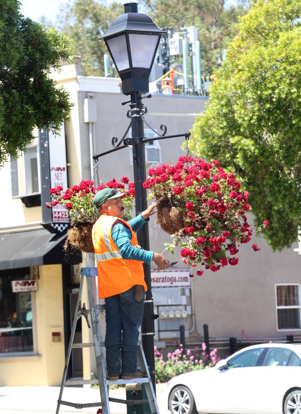 Photograph by George SakkestadBenito Torres of the Saratoga Public Works Department trims the hanging flower baskets along Big Basin Way in anticipation of America in Bloom.