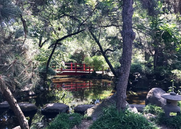 The Japanese gardens at Stockton's Micke Grove Regional Park offer serenewalking paths, a koi pond and a scarlet bridge that fervent Instagrammers will find irresistible. (Jackie Burrell/Bay Area News Group)