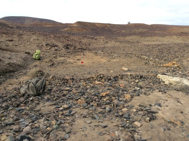 Discovery site at Napudet, west of Lake Turkana, Kenya. The red flag marks where Alesi was found. (© Isaiah Nengo)