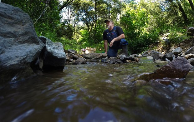 Tom Mutschelknaus of Italian Bar, Calif., pans for gold using a sluice boxon the South Fork of the Stanislaus River, on May 14, 2017. This year's historic rains and runoff are scouring California's rivers and streams, leaving gold fever in the air. (Gina Ferazzi/Los Angeles Times/TNS)