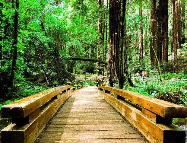 Muir Woods, near Mill Valley's adorable downtown, is a tourist favorite atany time of year. (Thinkstock)