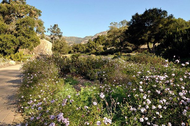 The 78-acre Santa Barbara Botanic Garden lets visitors explore wildflowermeadows, redwood groves and more. (Jay Sinclair/Visit Santa Barbara)