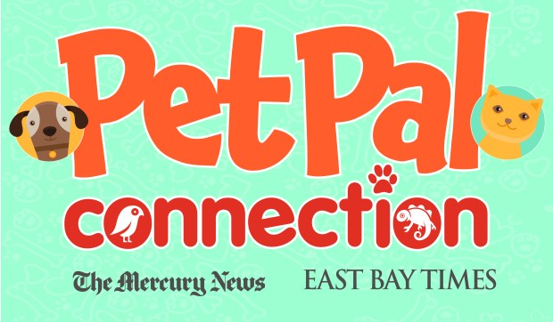 Pet Pal Connection Form