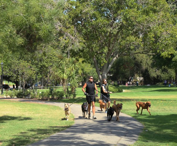 Bob Wilcox and some of the dogs he runs in Holmby Park in Los Angeles.(Claire Hannah Collins/Los Angeles Times/TNS)