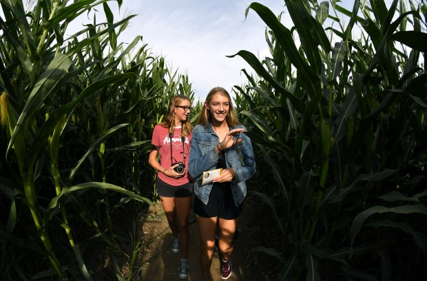 Corn mazes present business opportunities for Bay Area farms
