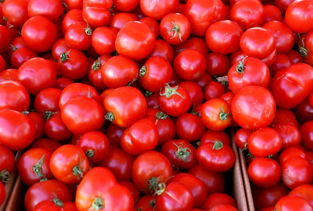 Hundreds of tomatoes rest in a bin at the Dirty Girl Produce tent during the Santa Cruz Farmer's Market on Wednesday afternoon. Growers have seen a large quantity of tomatoes this season. (Kevin Johnson -- Santa Cruz Sentinel)