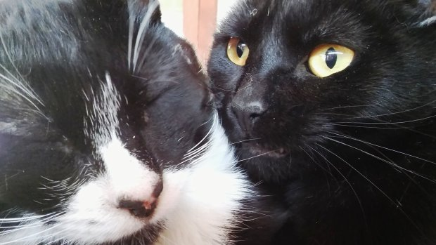Mr. and Mrs. are the Community Concern for Cats Pet of the Week for Dec. 1.(Courtesy of CC4C)