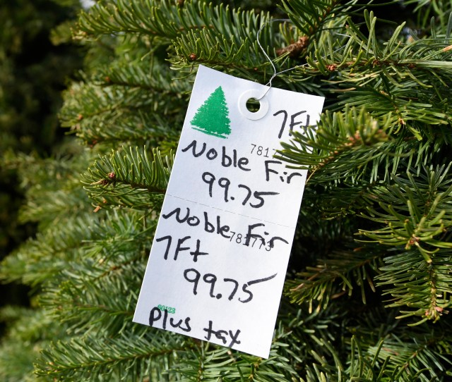 Noble Fir Christmas Tree Is Being Sold For   At Santas Winter Forest Christmas Tree Lot In Brentwood Calif On Friday Nov