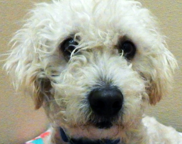 V. Kelly/Valley Humane SocietyScamper is the Valley Humane Society's pet of the week.