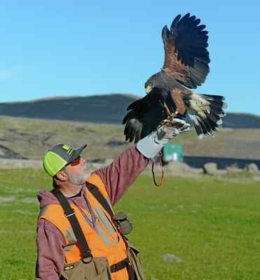 Fleet Of Falcons Keeps Northern California Landfill Clean East Bay Times