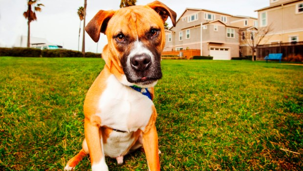 Hilarious Hound Pet PhotographyBuster is Friends of the Alameda Animal Shelter's pet of the week.