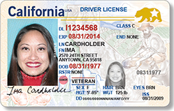 Beginning January 22, all California driver licenses and ID cards will also have a new card design. The new card features include a gold miner image on the right side of the card and California poppies on the bottom left. Under ultraviolet light you can see an image of the cardholder's photo, birth date, Golden Gate Bridge and Coit Tower. (Courtesy DMV)