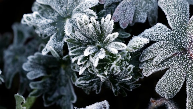 Frost blankets the plants in the garden at Lakeside Park in Oakland, Calif., on a frigid morning on Tuesday Feb. 20, 2018. (Laura A. Oda/Bay Area News Group)