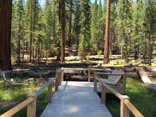 New boardwalks are part of the restoration of Mariposa Grove in YosemiteNational Park (Romina Pasten/Yosemite Conservancy)