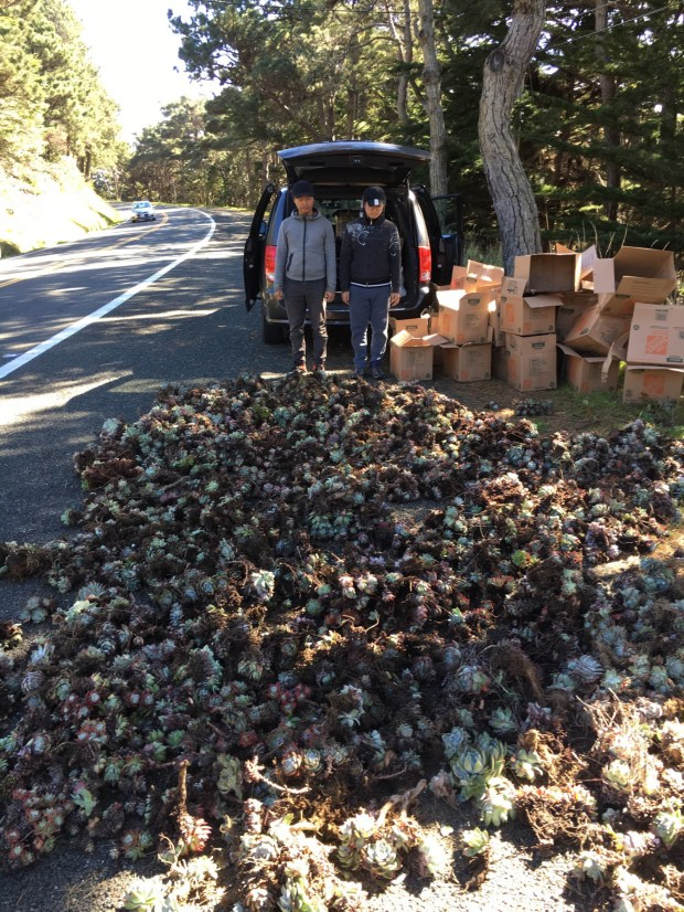 Two unidentified men are photographed by warden Patrick Freeling after he arrested them in connection with the alleged poaching of Dudleya succulent plants, harvested by the men from the Humboldt County coast. The plants are typically boxed up and shipped to countries like Korea, where they are sold for $40 to $50 a plant. (Courtesy Patrick Freeling/CDFW)