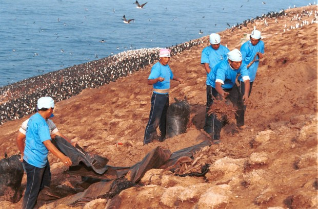 Each year, squadrons of workers manually scrape, sift and bag the bird guano from islands off the coast of Peru. MUST CREDIT: Bloomberg photo by Vera A. Lentz