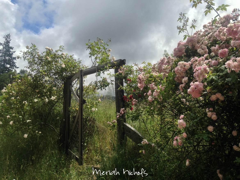 meriah nichols aug (1 of 1)-16