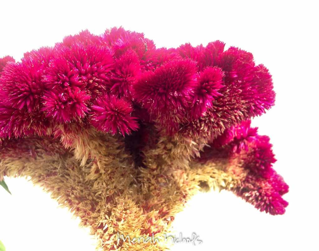meriah nichols arizona-3