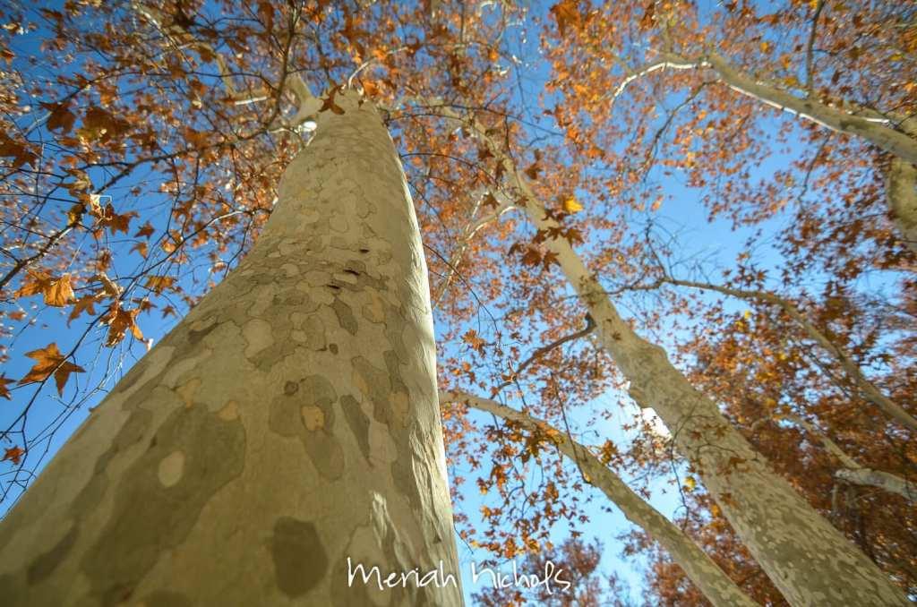 meriah nichols arizona-7