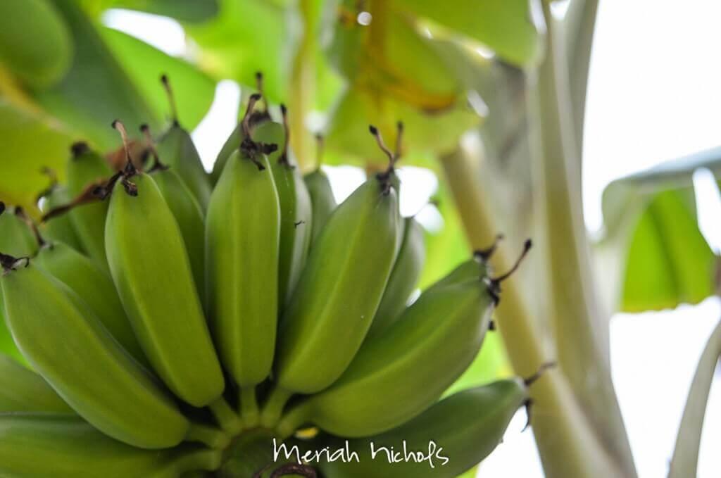 meriah nichols mexico-36
