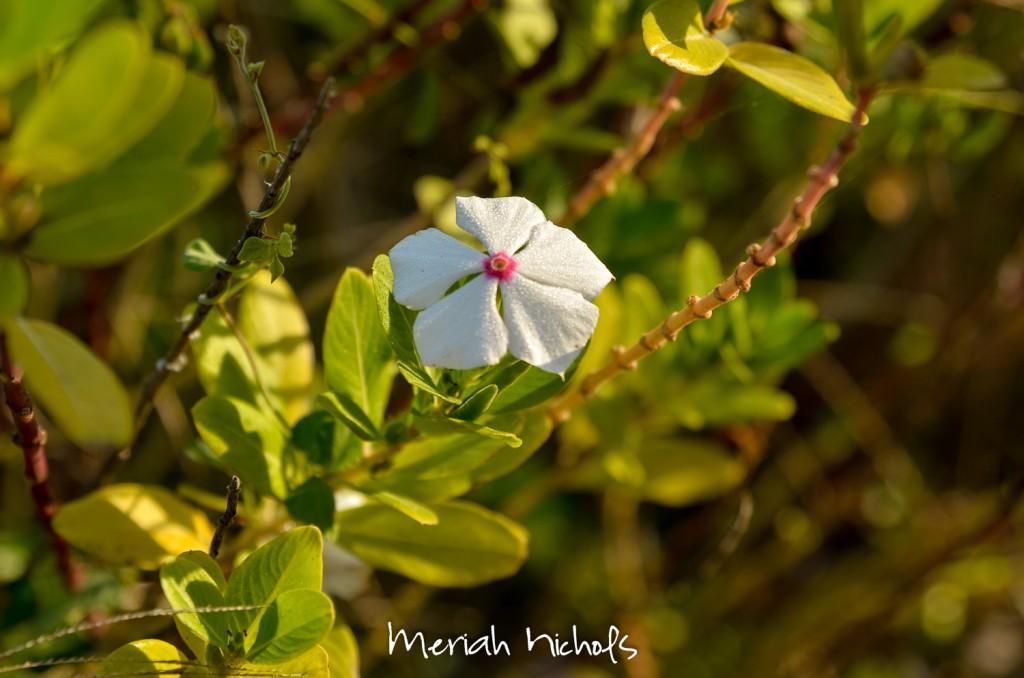 meriah nichols rv parks mexico-39