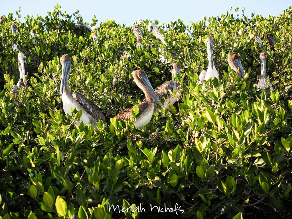meriah nichols mexico-44
