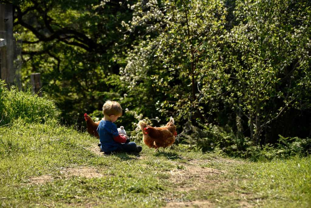 Mack - a small 2 year old boy with blonde hair and wearing a blue shirt with jeans - sits on the grown while the chickens come up to him. He is surrounded by big green trees