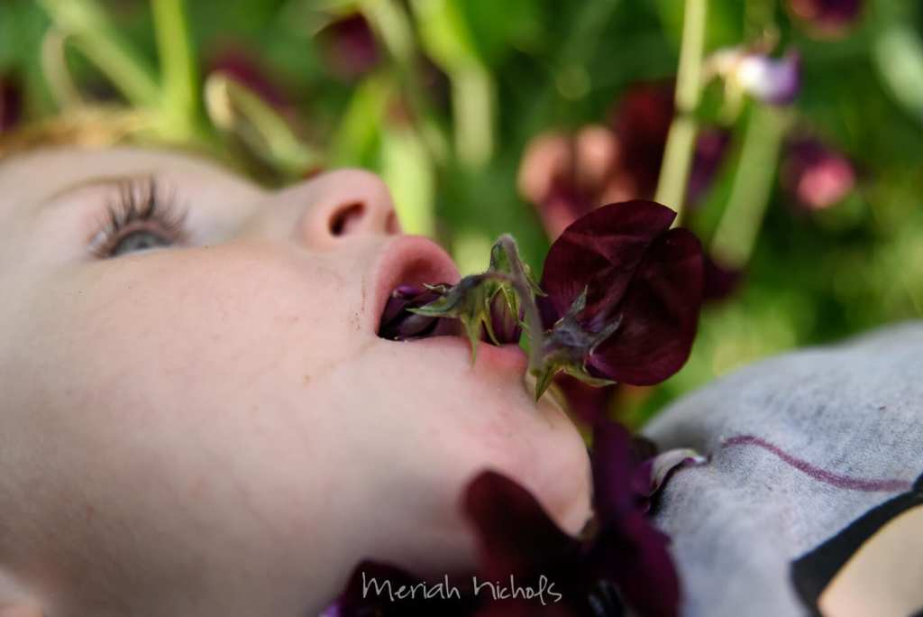 little boy with flowers in his mouth