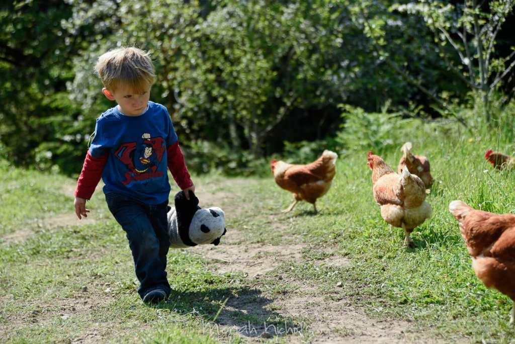 little boy walking next to chickens