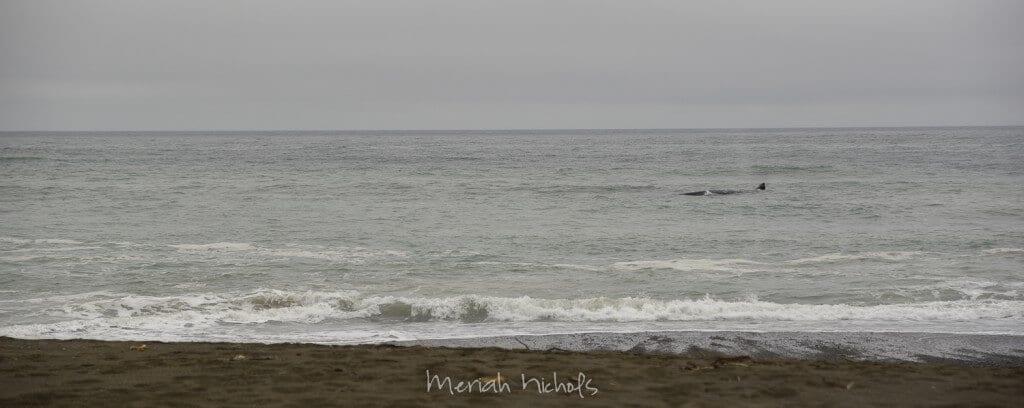Meriah Nichols -33