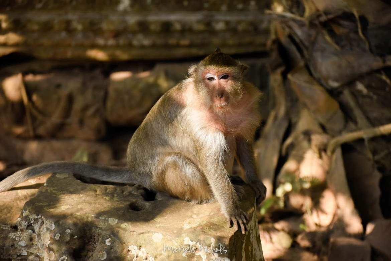Bayan at Angkor Wat by Meriah Nichols-34