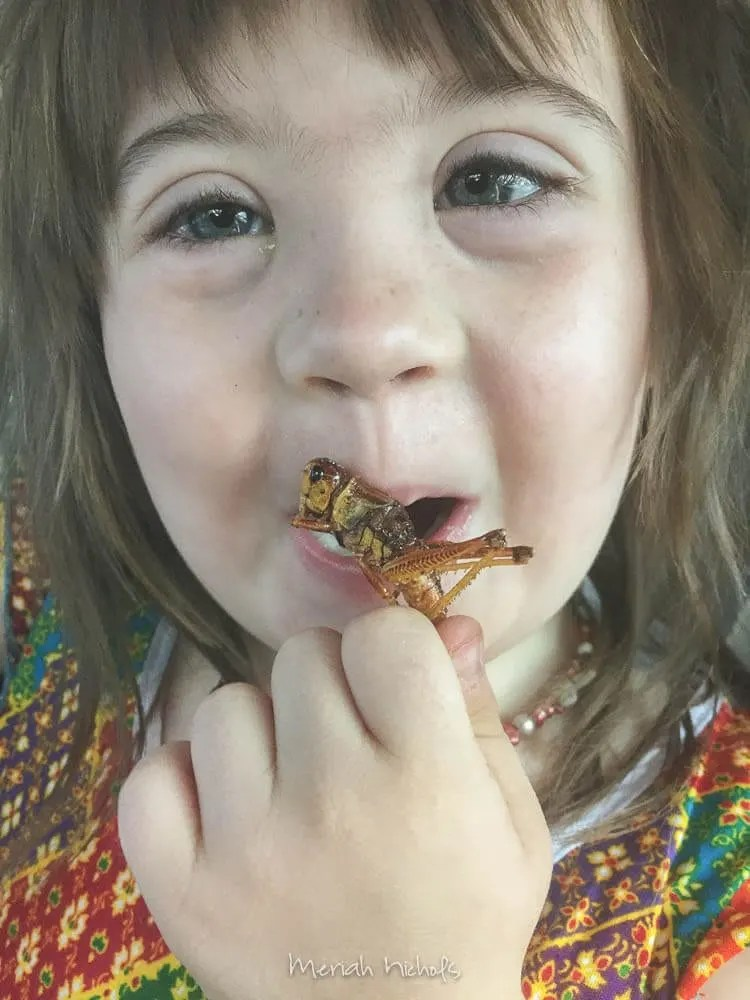 Moxie LOVED the grasshoppers! and so did I; those are absolutely delicious
