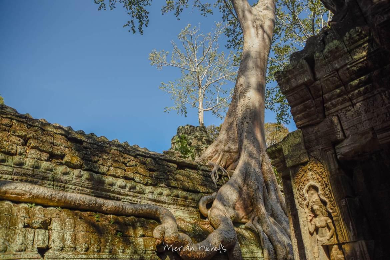Meriah Nichols Ta Prohm Angkor Wat -19
