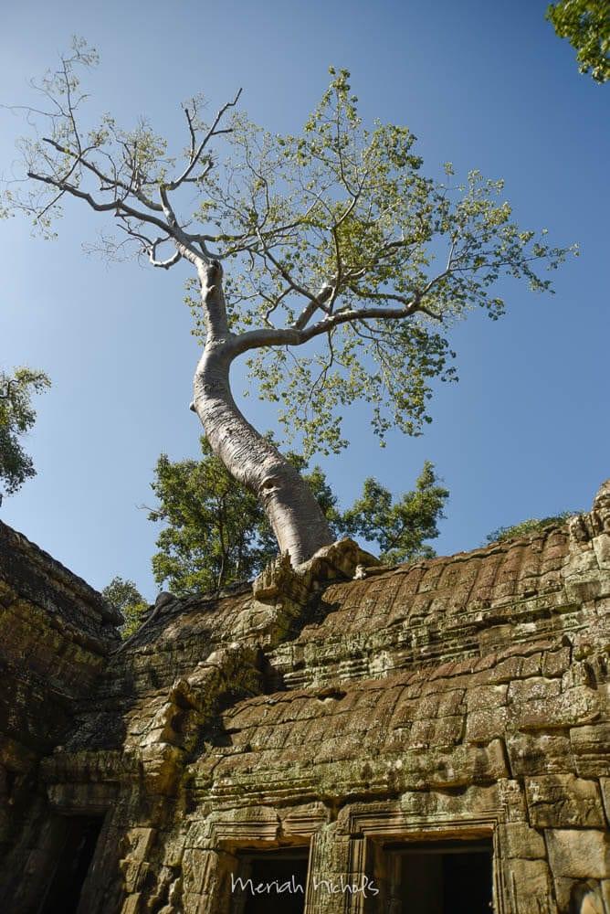 Meriah Nichols Ta Prohm Angkor Wat -28