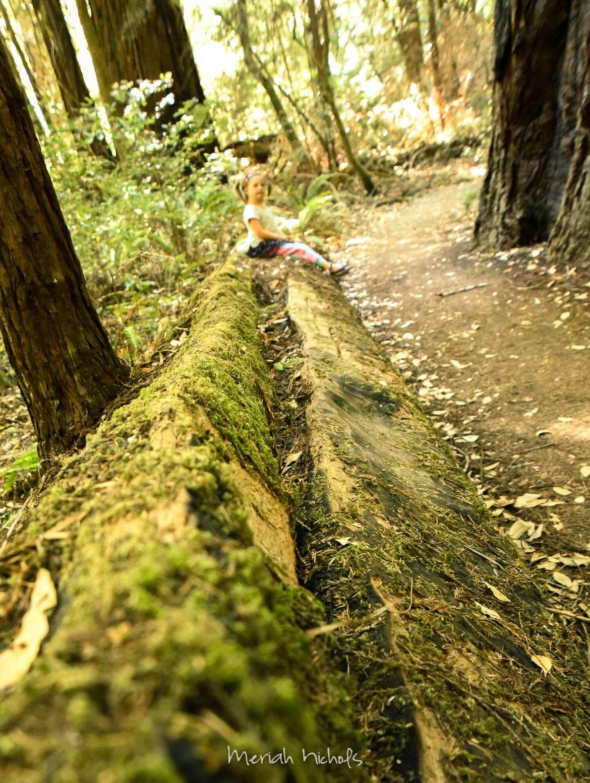 Meriah Nichols Redwoods-32