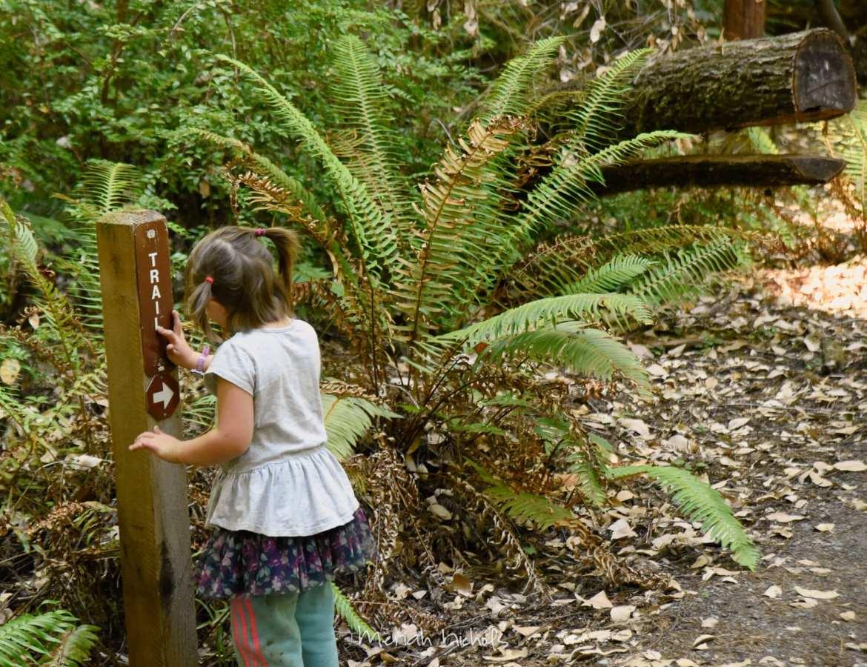 Meriah Nichols Redwoods-56